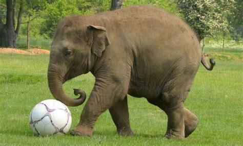 google images elephant elephant google search animal elephants pinterest