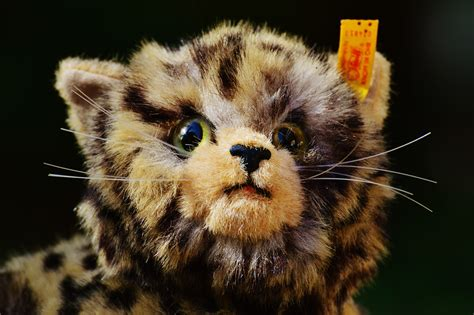 Boneka Hewan Kucing Imut gambar hewan imut margasatwa anak kucing binatang