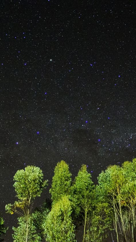 stock images night stars sky trees  stock images