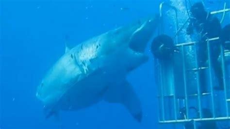 ataque de tiburon submarino en sudafrica buzo sobrevive al ataque del tibur 243 n blanco m 225 s grande