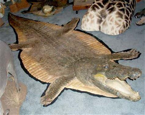 crocodile rug the enid blyton society view topic fattys rug