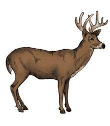 deer hunting gifs tenor