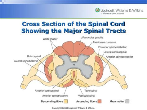 cross section of spinal cord tracts ppt chapter 60 assessment of neurologic function