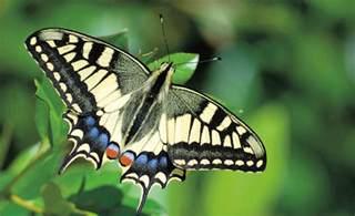 garten insekten insekten garten rasenpflege selbst de