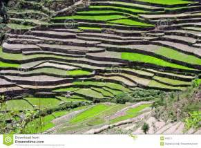 Design House Business Model step farming in the uttaranchal himalayas india stock