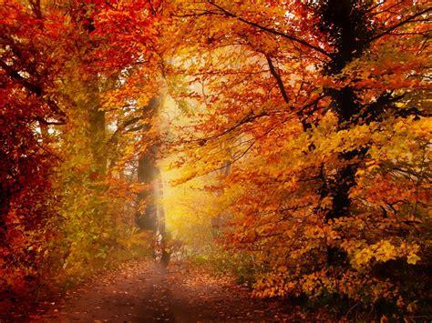 free autumn wallpaper 1600x1200 70482