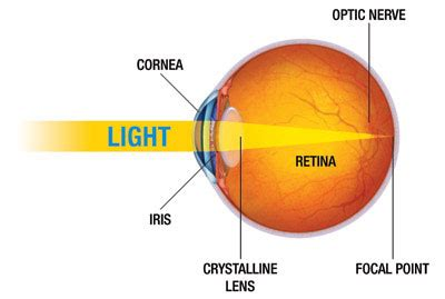 how the eye works nkcf.org