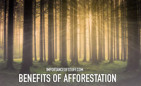 Advantages Of Afforestation Essay by Benefits Of Afforestation Essay And Speech