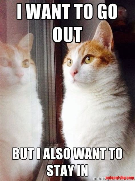 Funny Cat Memes - 36 funny cat memes that will make you laugh out loud