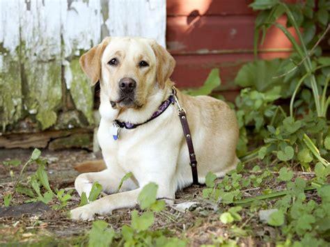 dog barn 10 commands every barn dog should know american kennel club