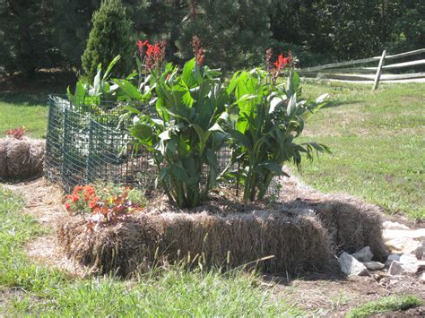 Hay Bale Garden by Vegans Living The Land Straw Bale Lasagna Gardening