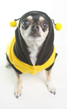 yorkie bee sting 1000 images about dogs on chihuahuas pigs and fighters