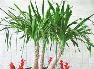 house plant types vastu plants for your house the royale