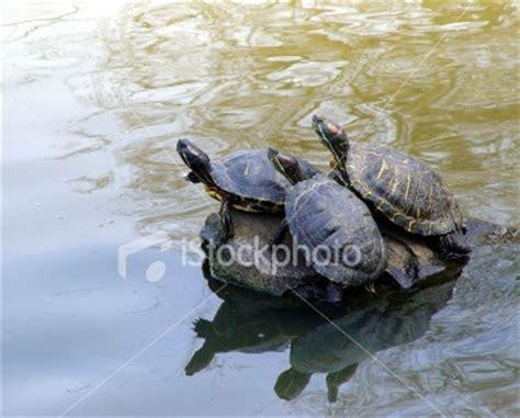 google images turtle cute turtles google search turtles pinterest