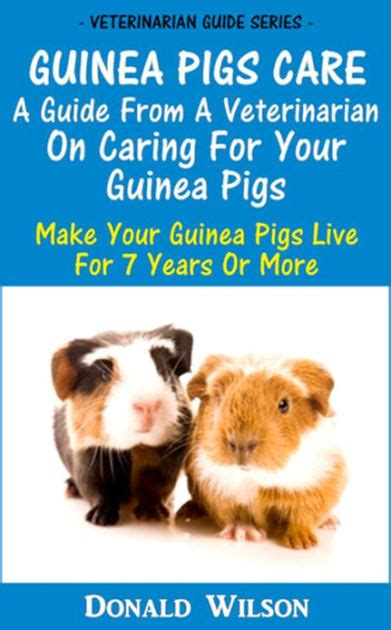 7 Tips On Caring For Pigs by Guinea Pigs Care A Guide From A Veterinarian On Caring