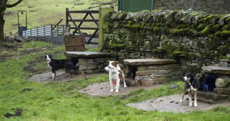 backyard ideas for dogs 34 doggone backyard house ideas
