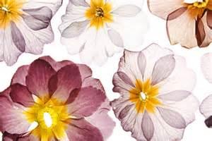 Jewish Decorations Pressed Flower Platter Challah Crumbs