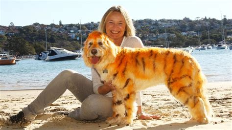 dogs that look like puppies as adults a real bouncing tigger that looks like a tiger has wanting dye
