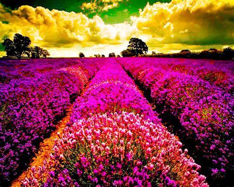 imagenes de paisajes florales paisajes con flores naturales fotografias y fotos para