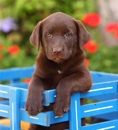 cool puppy names cool names 300 awesome puppy name ideas