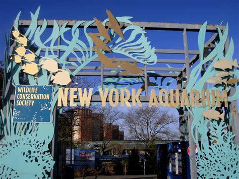 aquarium design new york custom aquariums life support systems new york aquarium