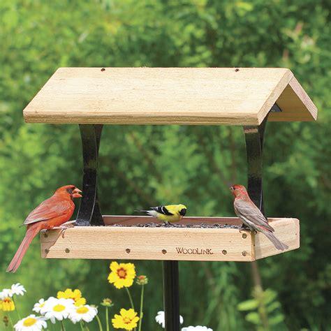is a squirrel proof bird feeder necessary sussex