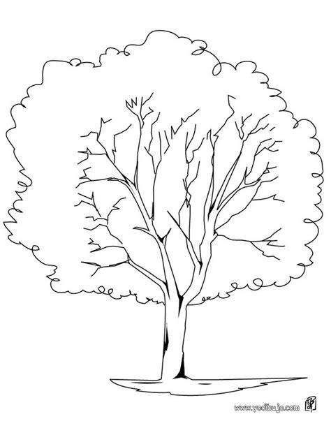 imagenes de arboles otoñales para pintar dibujos de 225 rboles para descargar imprimir y colorear