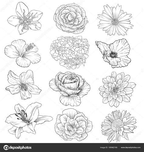 bloemen zwart wit tekening vector tekening van bloemen stockvector 169 cat arch angel
