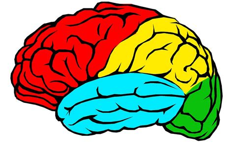 brain clipart how to learn the skills you need without going to school