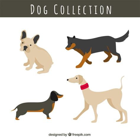 different races of dogs set of dogs of different races vector free