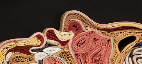 Anatomical Sections by Paper Filigree Demilked