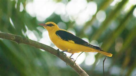 common birds of kerala birds of kerala page 2