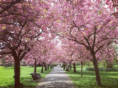 stunning places   spring flowers  london parks