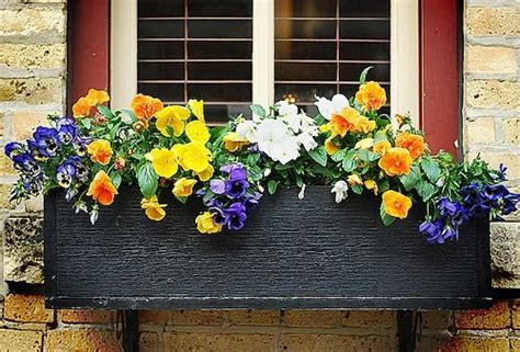 winter plants for window boxes choose flowers for window boxes www coolgarden me
