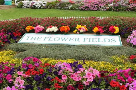 the best time to visit the flower fields in carlsbad socal field trips