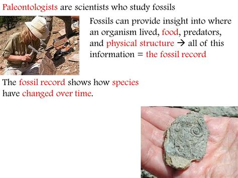 section 17 1 the fossil record chapter 17 the history of life ppt video online download