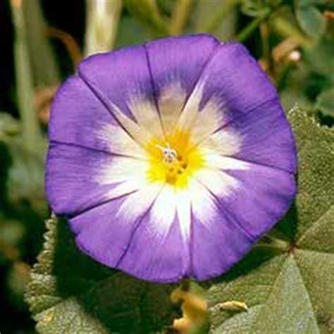 di giorno fiore kioku l idea regalo fatta a fiore i nostri fiori la