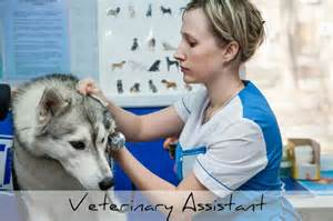 Duties Of A Veterinarian by Who Works At Veterinary Clinics And Hospitals Vet Tech Guide
