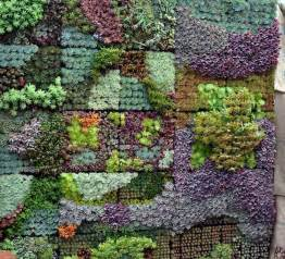 Plants For Vertical Gardens 25 Best Ideas About Succulent Wall Gardens On
