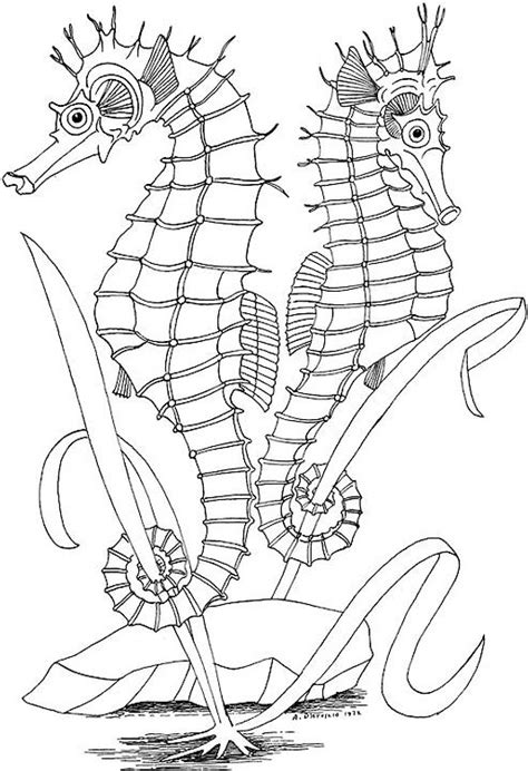 printable coloring pages for adults only seascape coloring page