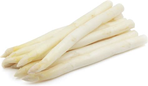 white asparagus information recipes and facts