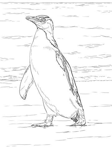 junco bird coloring page 89 junco bird coloring page great lizard cuckoo