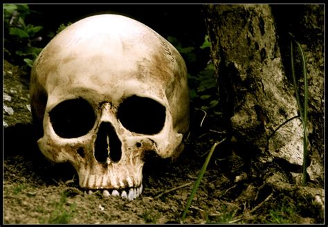 picturespool skull wallpapers skeleton wallpapers