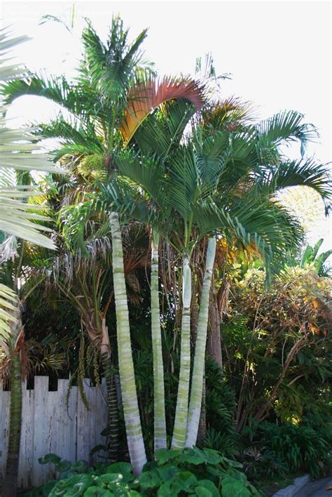 Wonderful Palms Garden #1: 908350.jpg