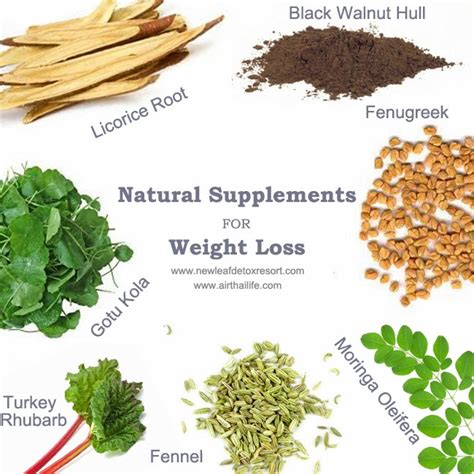 supplement for weight loss use these 10 herbs to lose weight naturally biggies boxers