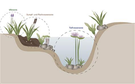 Sumpfzone Teich by Teichgestaltung Teich Bepflanzen Dekorieren Oase