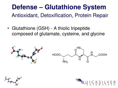 Cellar Antioxidant Defense And Detoxication System In The by Ppt Christopher W Shade Ph D Chris