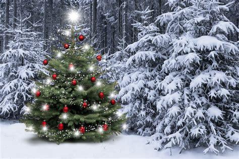 weihnachtsbaum mit photos zum anmalen waldbret 252 ber wald jagd und gutes fleisch