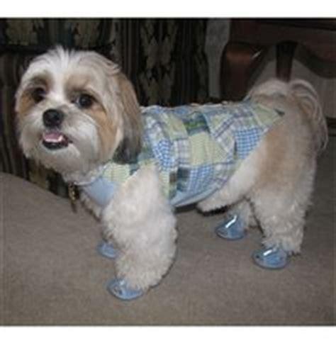 shih tzu slippers 1000 images about dogs wearing sandals on