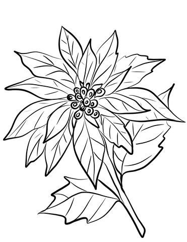 clipart natale da colorare disegno di stella di natale da colorare disegni da